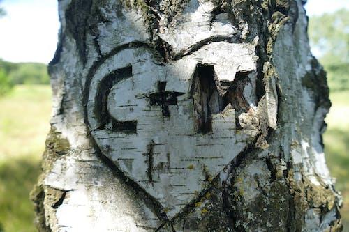 Photos gratuites de aboiement, amour, arbre, bois