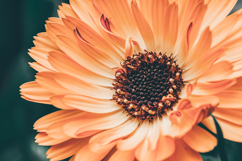 Macro Photography of Flower