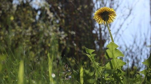 光, 天性, 户外摄影, 綠色 的 免费素材照片