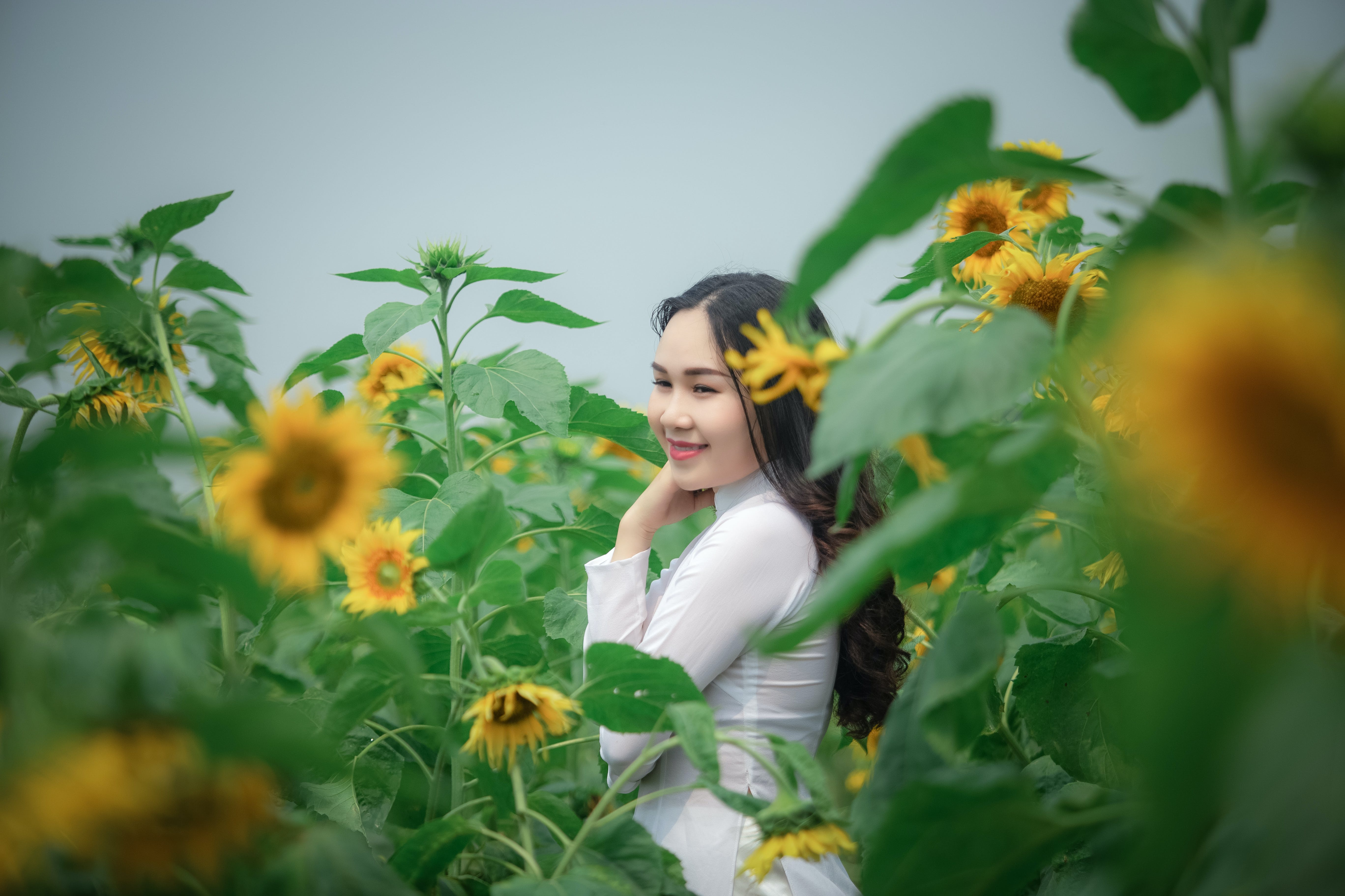 Woman Wearing White Long-sleeved Shirt Standing at Yellow Sunflower Field