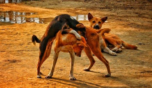 Foto profissional grátis de animais, animais de estimação, cachorros, canino