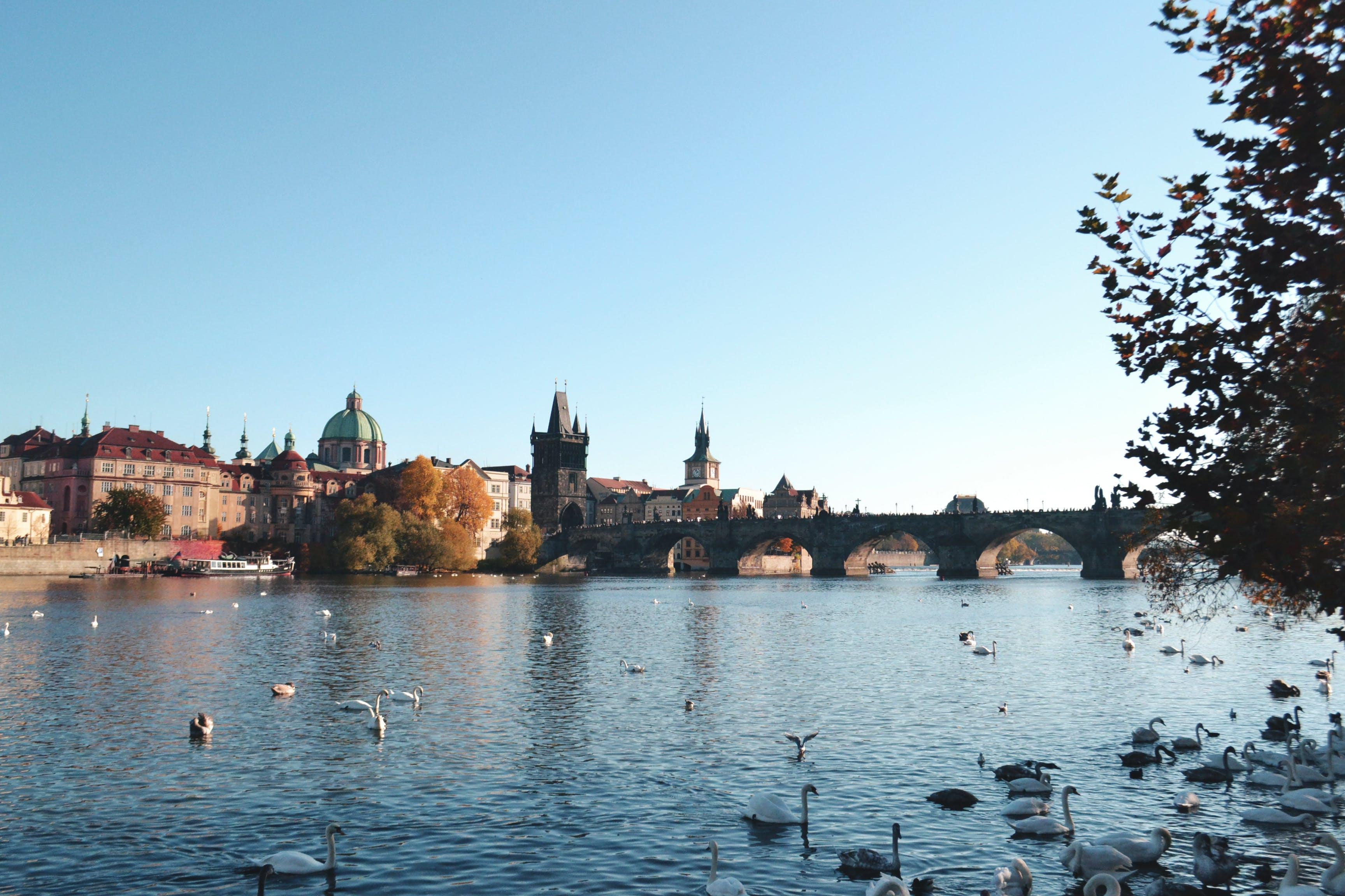Flock of Ducks Near Bridge