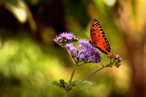 Free stock photo of butterfly, flower, garden