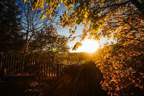 açık, ağaçlar, çit, eskrim içeren Ücretsiz stok fotoğraf