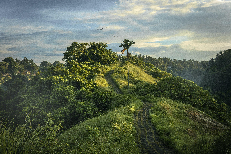 Foto stok gratis alam, awan, bukit, hijau