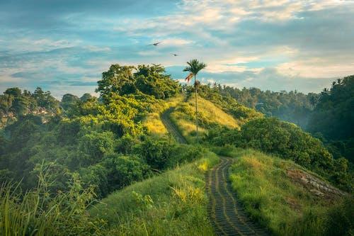 Foto stok gratis alam, awan, hijau, hutan