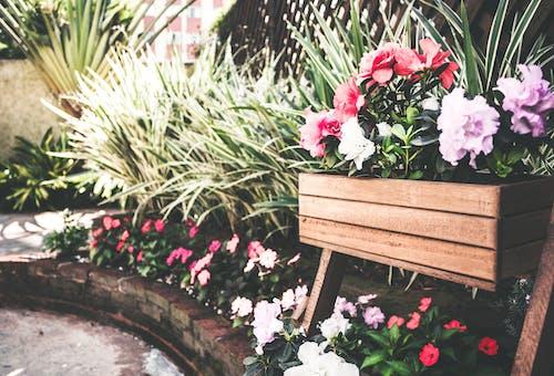คลังภาพถ่ายฟรี ของ ดอกไม้สวย