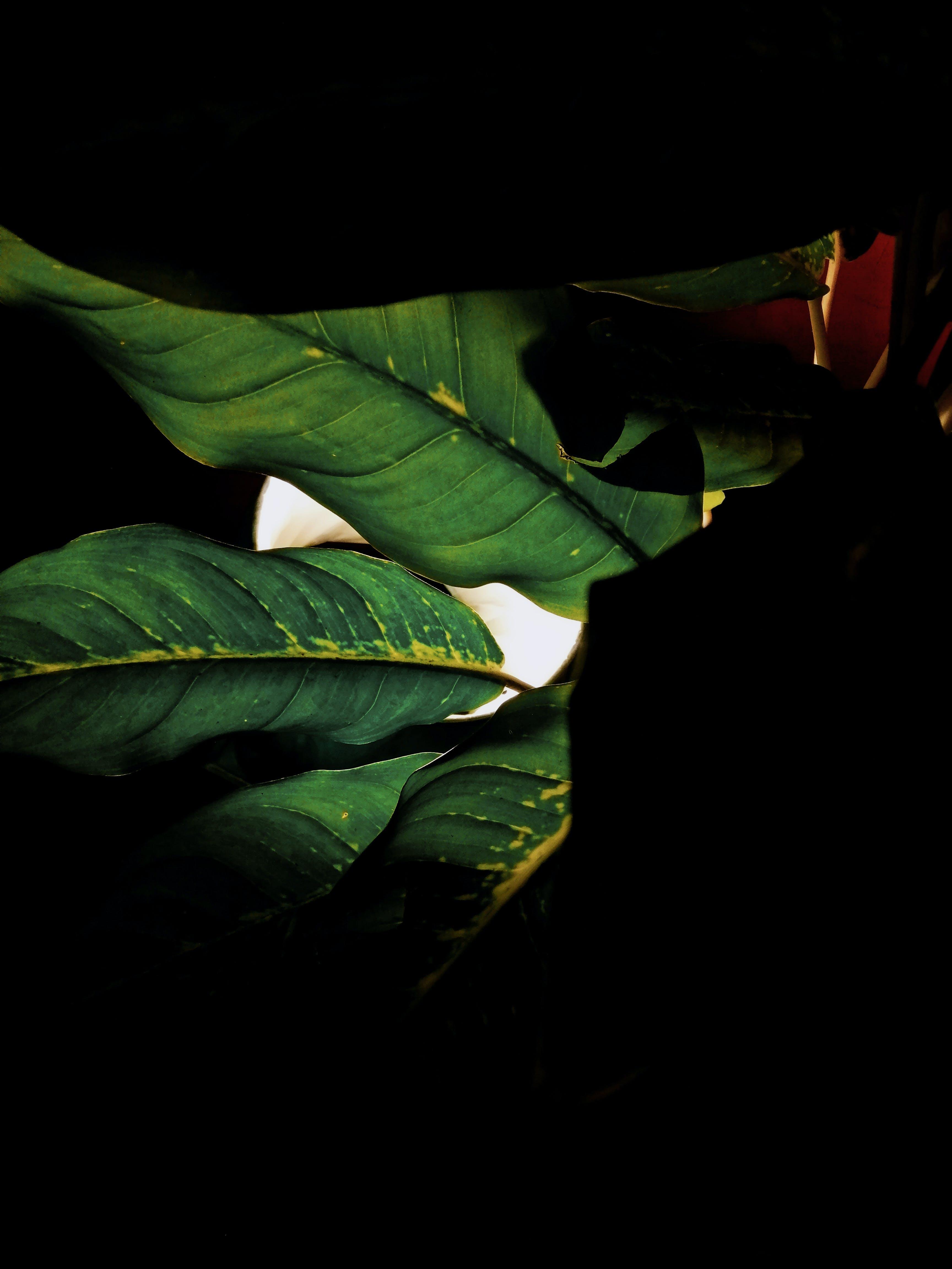 blätter, dunkel, dunkelgrün