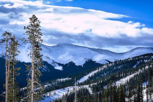 Photos gratuites de arbres, froid, gelé, magnifique