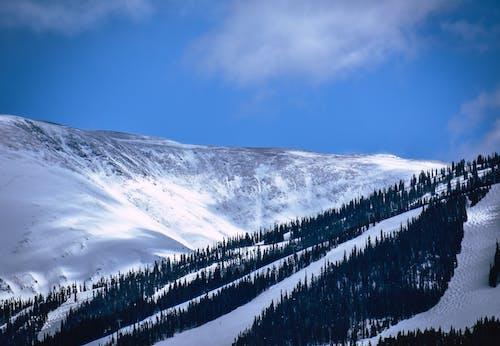 冷冰的, 凍結的, 天性, 景觀 的 免费素材照片
