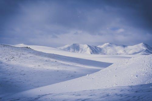 下雪的, 下雪的天氣, 似雪, 冬季 的 免费素材照片