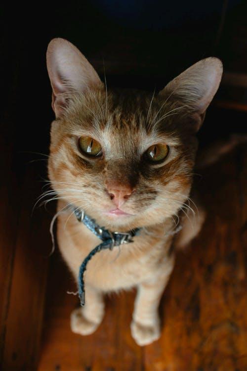 Free stock photo of cat, HD wallpaper