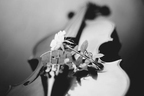 #violino #music#写真#壁紙の無料の写真素材
