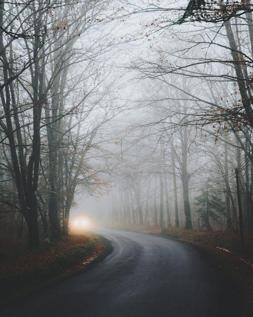 Photos gratuites de arbres, asphalte, branches d'arbre, brouillard