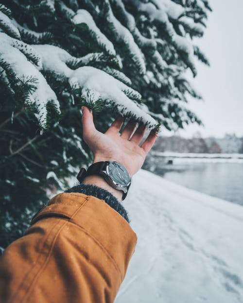 Person Touching Leaf With Snow