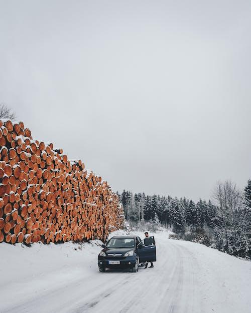 下雪的, 下雪的天氣, 人, 冬季 的 免費圖庫相片