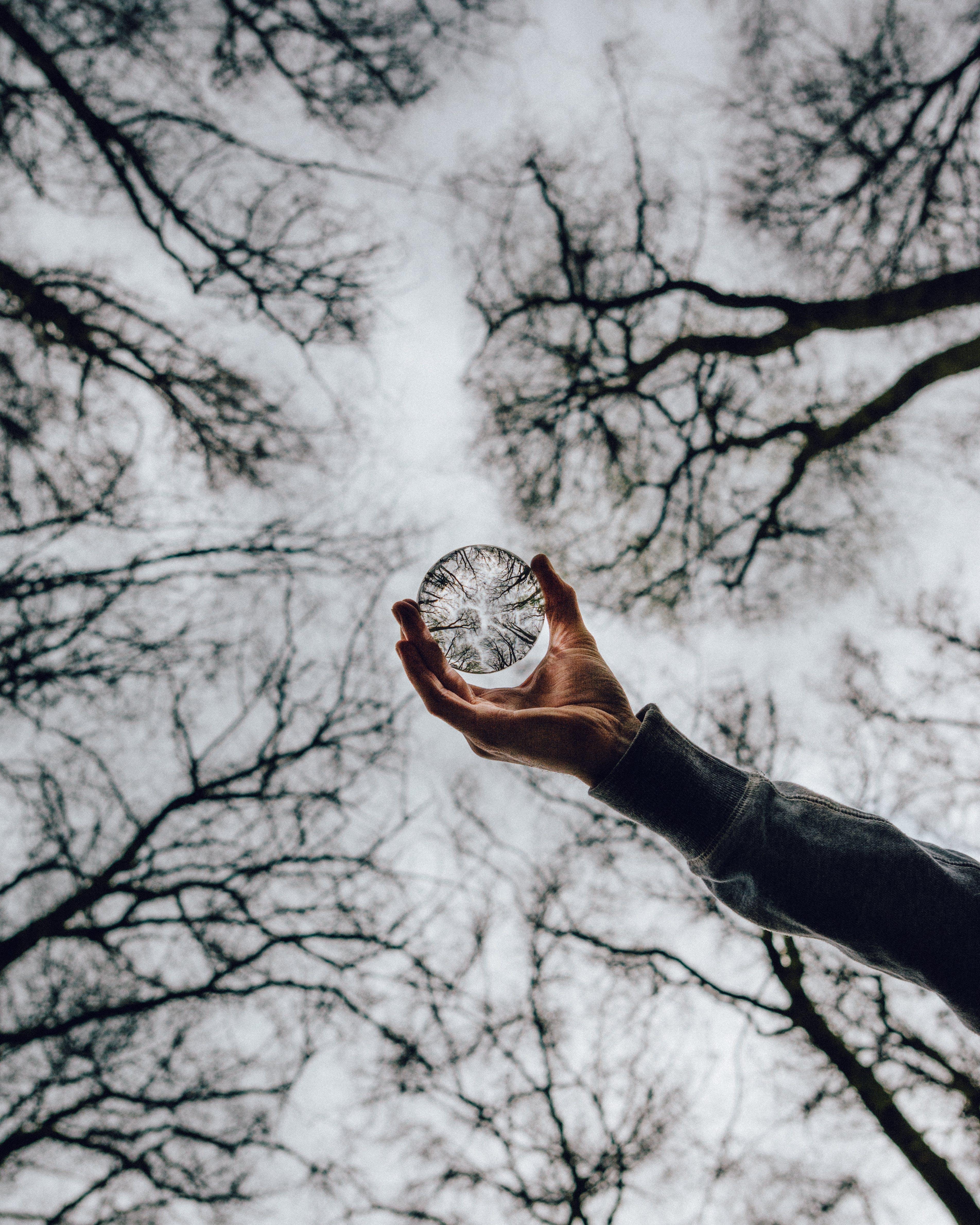 Foto d'estoc gratuïta de aguantar, arbres, bola de vide, bola de vidre
