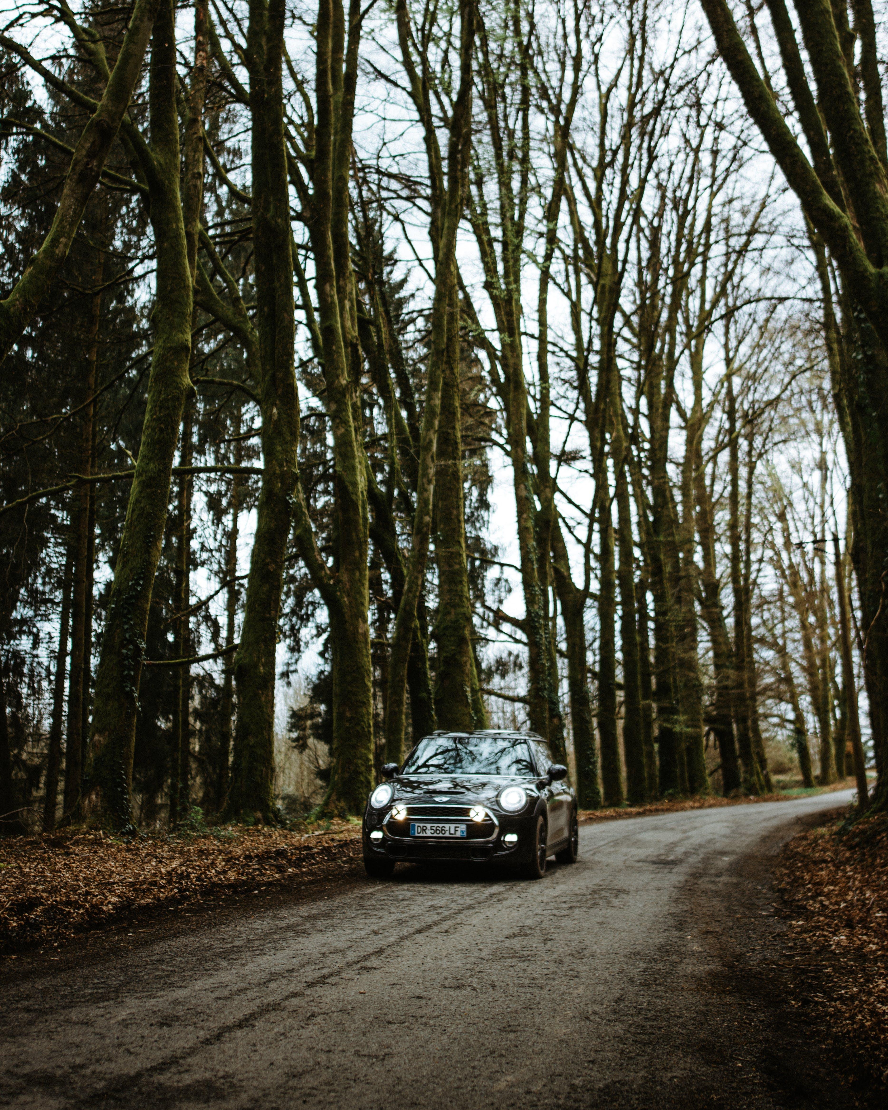 Kostenloses Stock Foto zu äste, auto, automobil, bäume