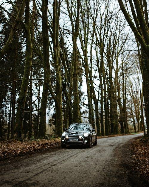 Imagine de stoc gratuită din arbori, auto, automobil, carosabil