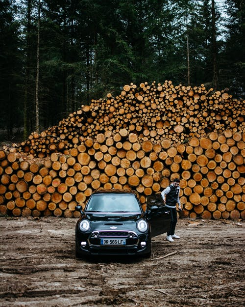 Immagine gratuita di abeti, alberi, aperto, auto