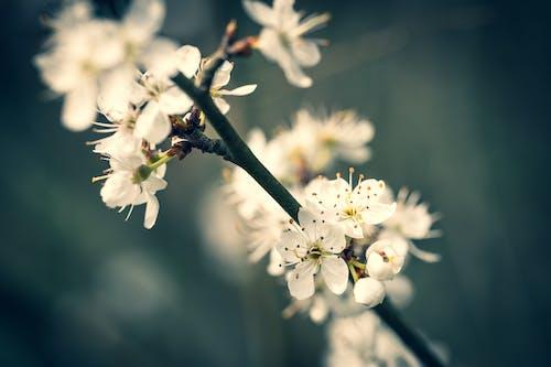 Fotos de stock gratuitas de árbol, blanco, bonito, brotar