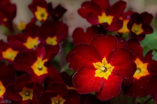 Gratis arkivbilde med blomst, makro, makrobilde, makrofotografering