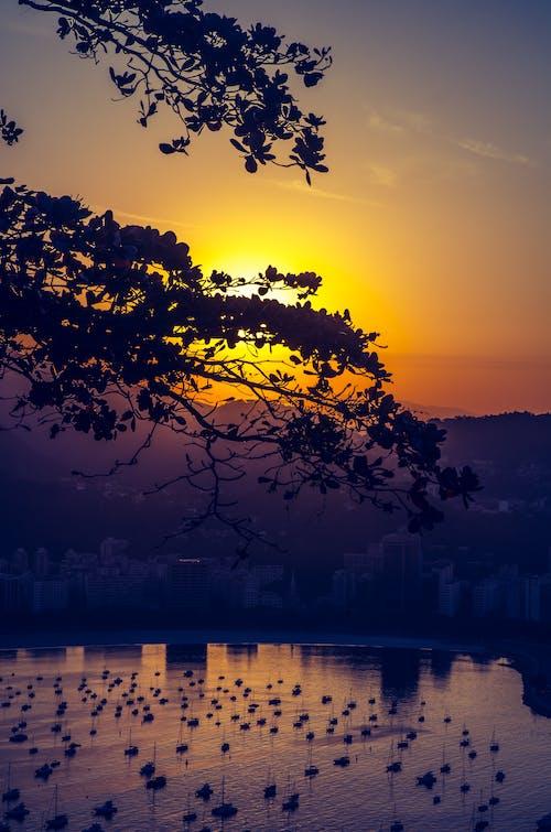 Immagine gratuita di acqua, alba, albero, architettura