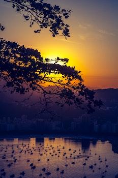 Free stock photo of light, city, dawn, landscape