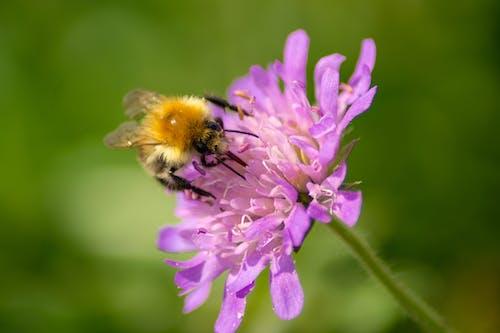 Kostnadsfri bild av bi, blommor, grön, honungsbi