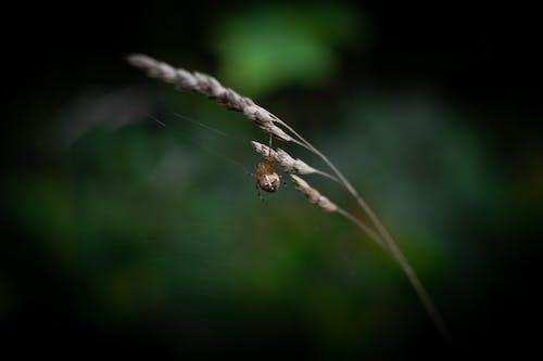 Kostnadsfri bild av Spindel, spindelnät