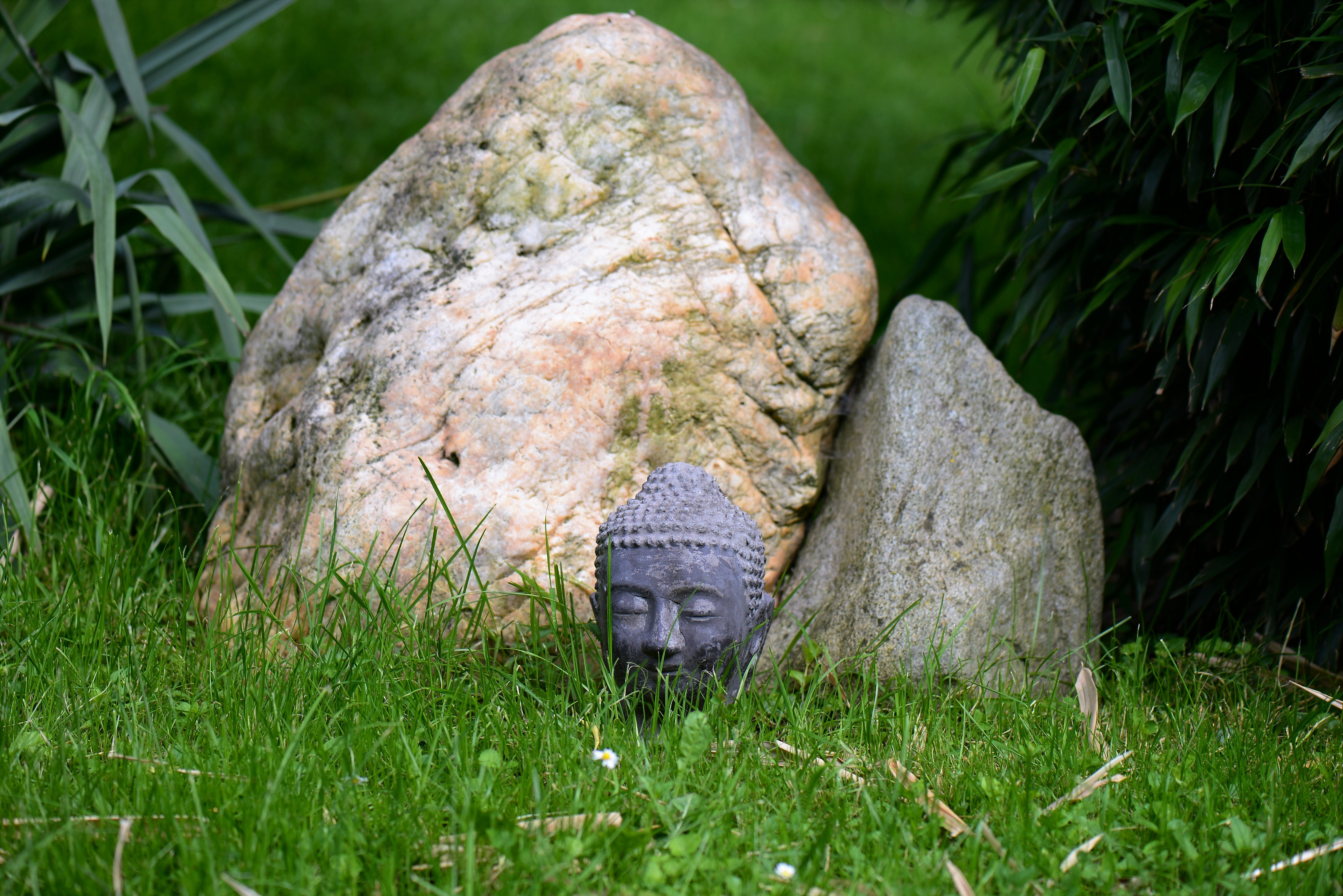 Free stock photo of garden, hidden, head, stone