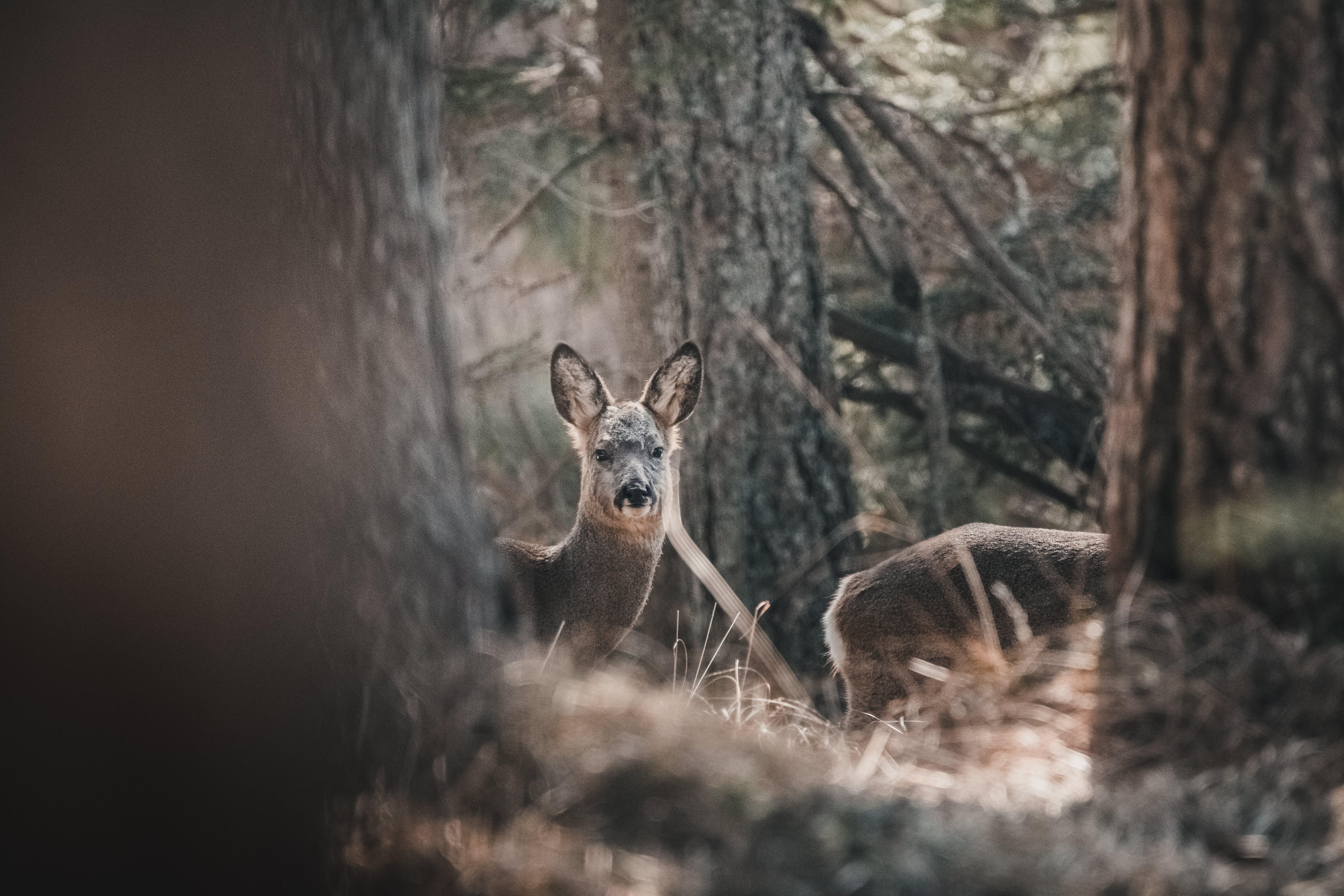 Foto d'estoc gratuïta de a l'aire lliure, animal, animal salvatge, arbres
