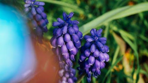 Fotobanka sbezplatnými fotkami na tému #nature, 4k tapety, jarný kvet, krásny kvet
