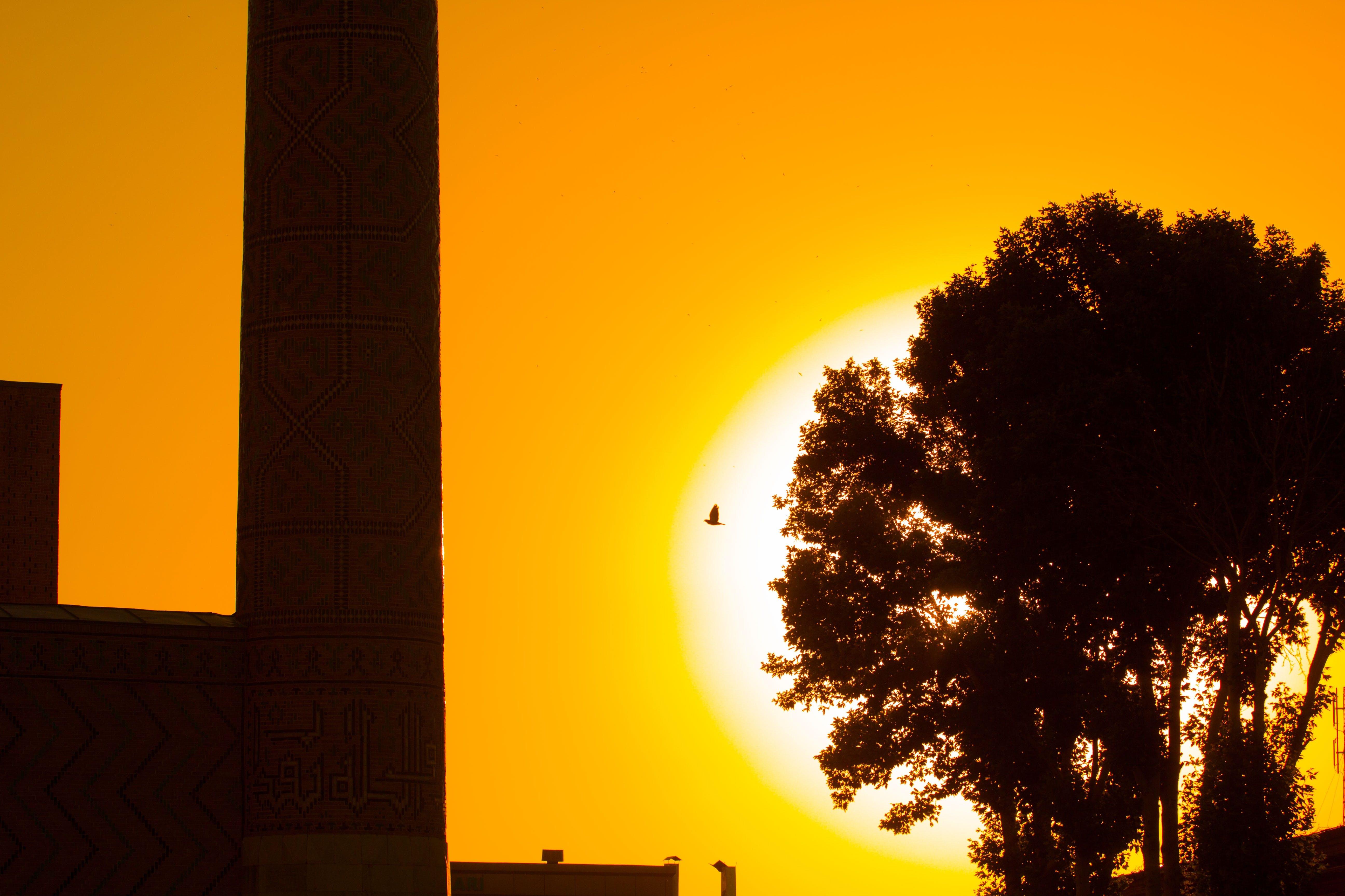 Free stock photo of light, dawn, sunset, bird