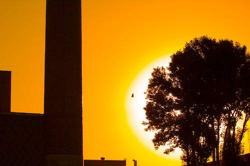 Photographie De Silhouette D'oiseau Volant Au Dessus De L'arbre Avec Fond Coucher De Soleil
