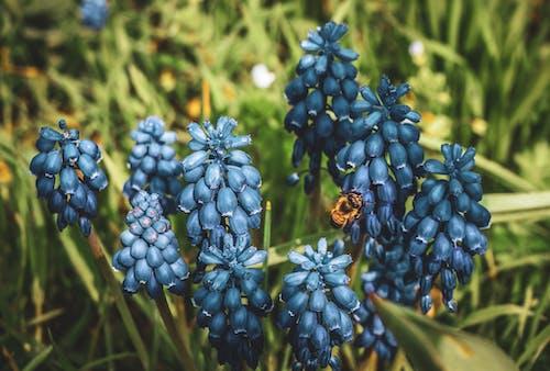 Fotobanka sbezplatnými fotkami na tému 4k tapety, modré kvety, nádherné kvety, prírodné pozadie