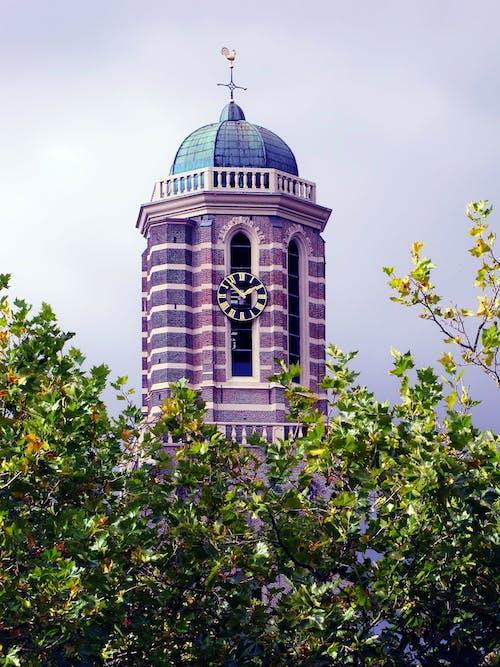 Foto d'estoc gratuïta de arbre, arquitectura, cúpula, edifici