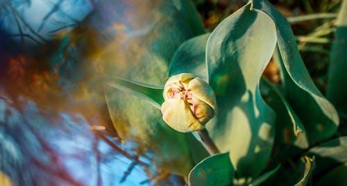 Fotobanka sbezplatnými fotkami na tému 4k tapety, farebná tapeta, nádherné kvety, štýlová tapeta