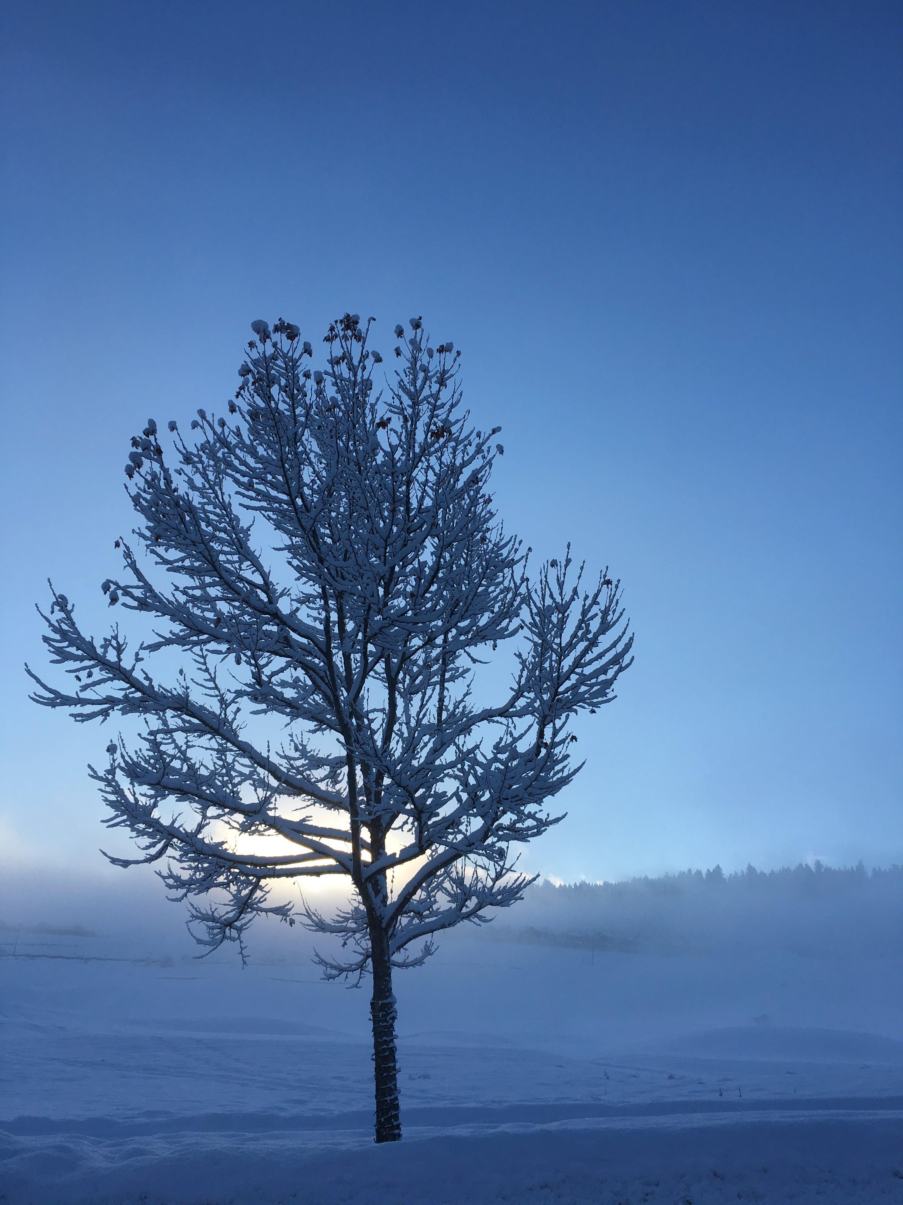 Photos gratuites de arbre, aube, branches, branches d'arbre