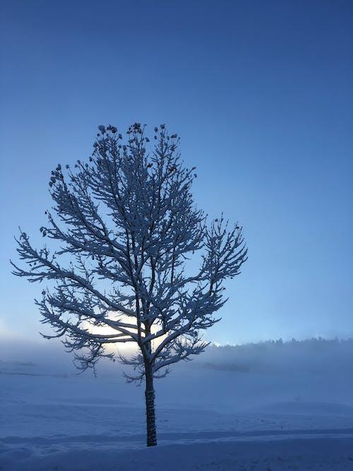 가지, 감기, 겨울, 경치가 좋은의 무료 스톡 사진