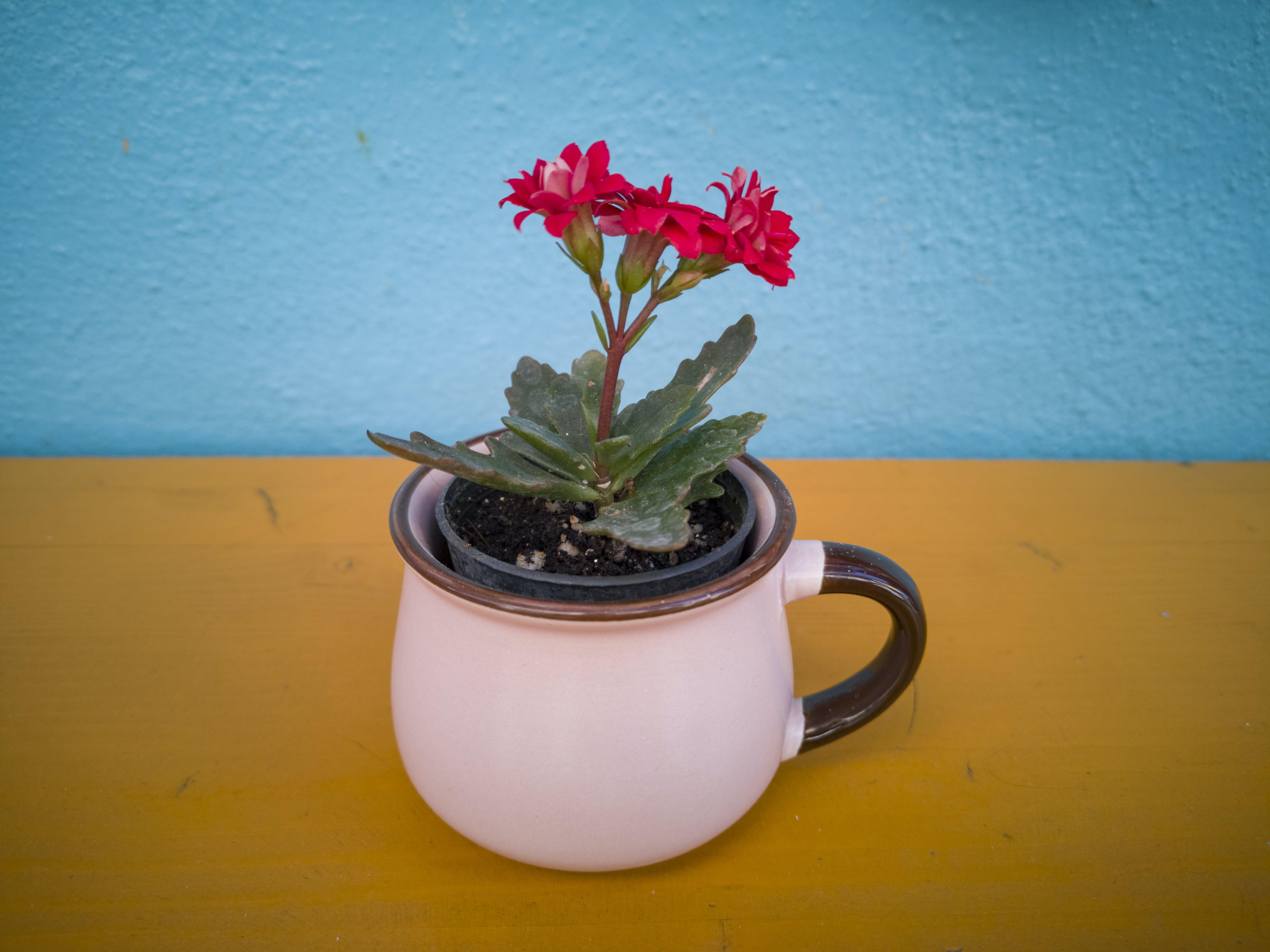 Ảnh lưu trữ miễn phí về cái bình hoa, cận cảnh, cánh hoa, cây cảnh