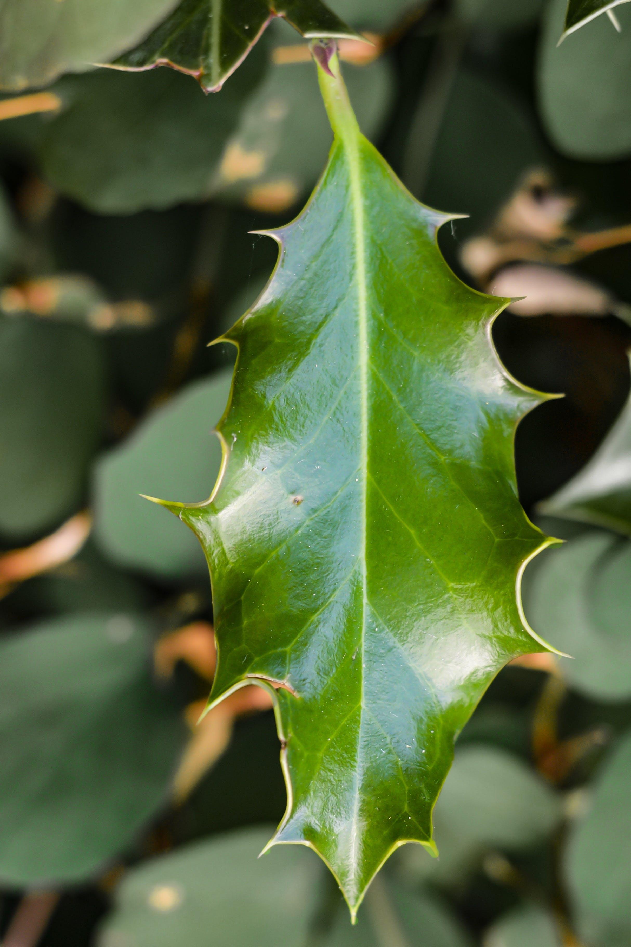 Green Leaf in Close Up Photo