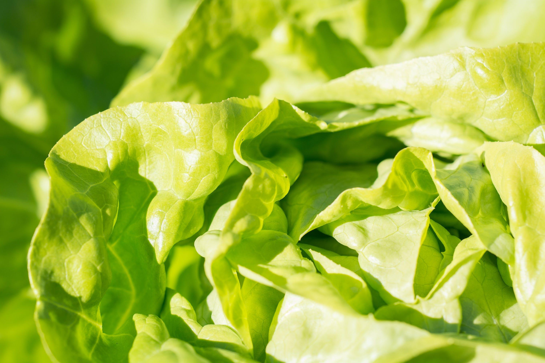agriculture, close-up, crisp
