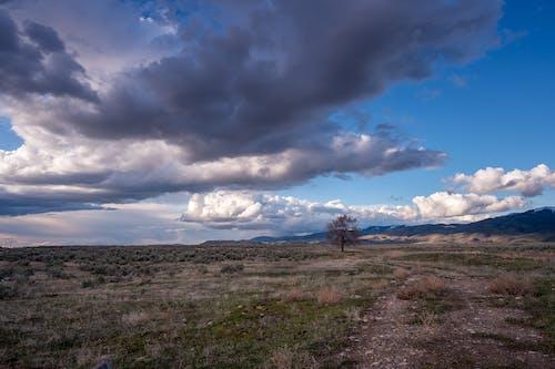 ağaç, bulutlar, bulutlu, bulutlu gökyüzü içeren Ücretsiz stok fotoğraf