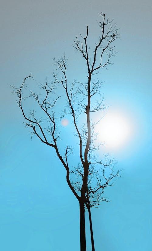 Gratis stockfoto met blauwe lucht, dode boom, ochtendzon