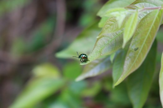 Metallic Beetle on Green Leaf during Daytime