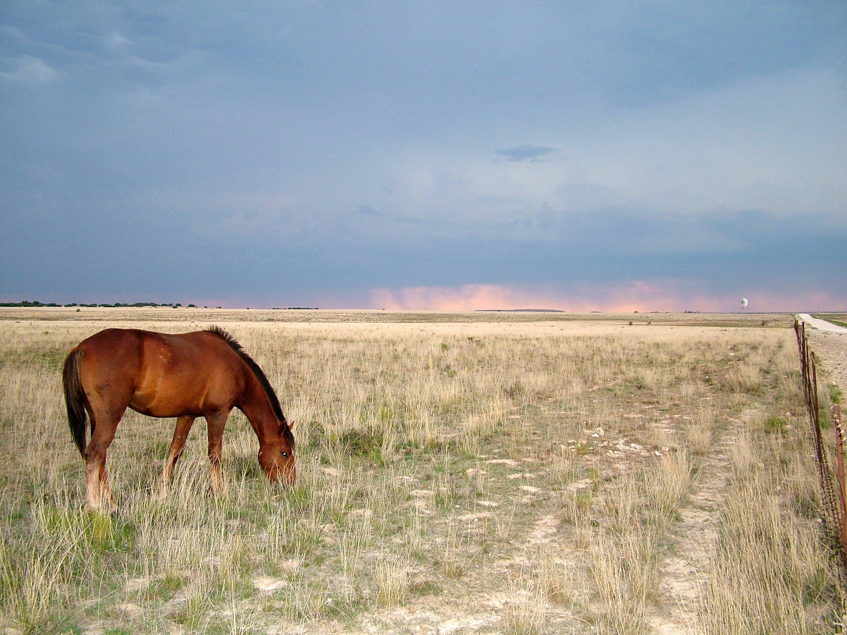 Kostenloses Stock Foto zu karoo, pferd, sturm