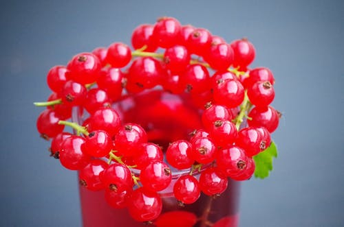 Red Berries Placed on Glass Cup