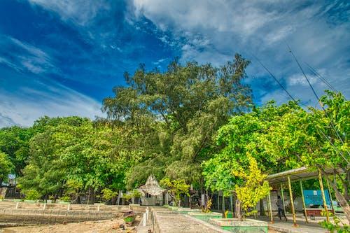 Foto d'estoc gratuïta de arbres, bon temps, boscos, cel