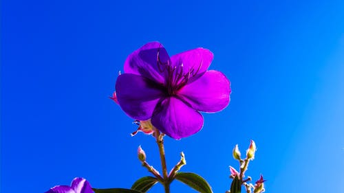 คลังภาพถ่ายฟรี ของ กระจ่าง, การถ่ายภาพมุมต่ำ, ท้องฟ้าสีคราม, พื้นหลังสีน้ำเงิน